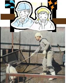 タンパク源としての豚肉の時代