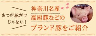 神奈川名産 高座豚などのブランド豚をご紹介