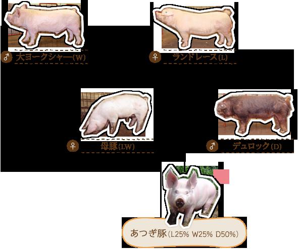 生体管理と飼育環境づくり