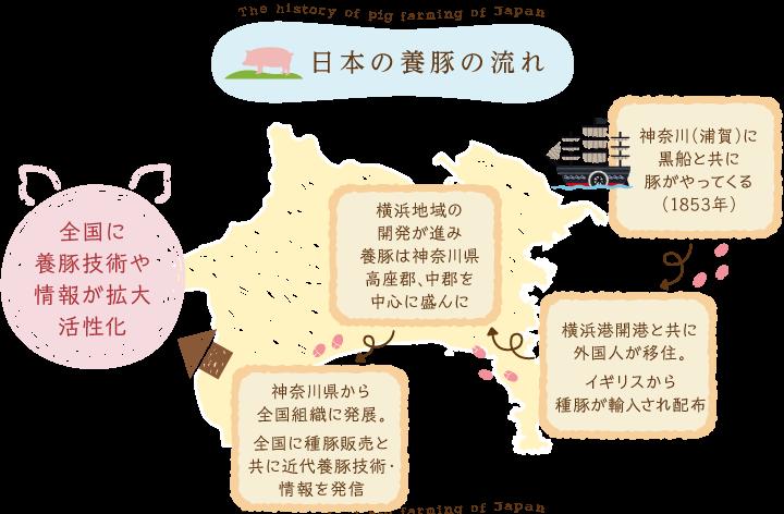 神奈川養豚の歴史