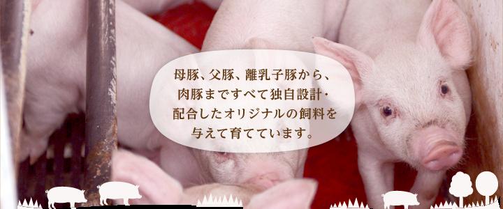 母豚、父豚、離乳子豚から、肉豚まですべて独自設計・配合したオリジナルの飼料を与えて育てています。