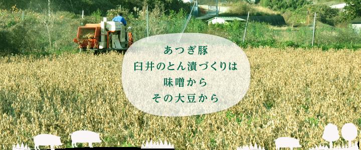 あつぎ豚臼井のとん漬づくりは味噌からその大豆から