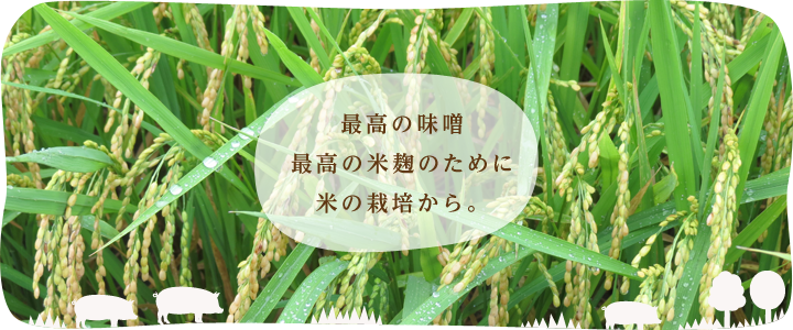 最高の味噌、最高の米麹のために、米の栽培から。
